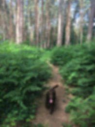 Woodland dog walk in Pembury
