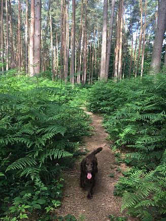 Woodland dog walk in Pembury