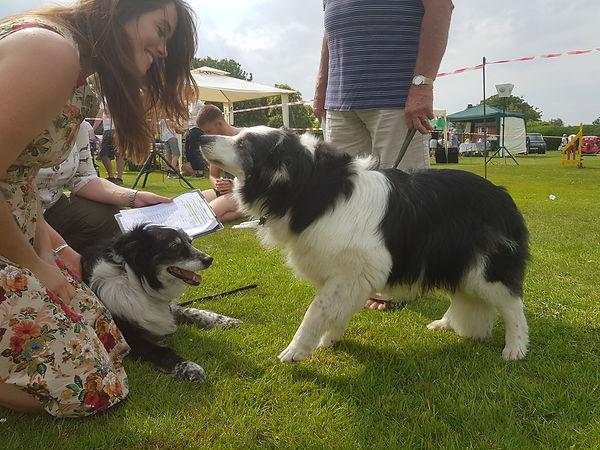 Matfield Fete Dog Show 2019