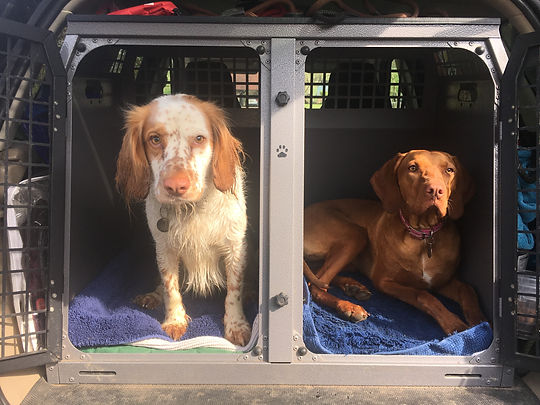 Safe transport of our Happy Hounds
