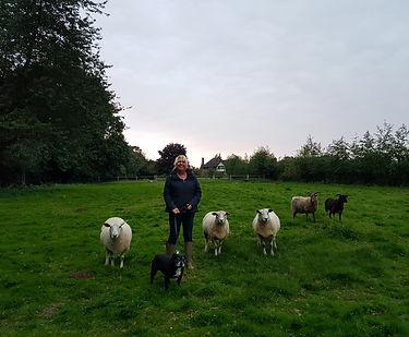 Garden visit to feed sheep walk the dog