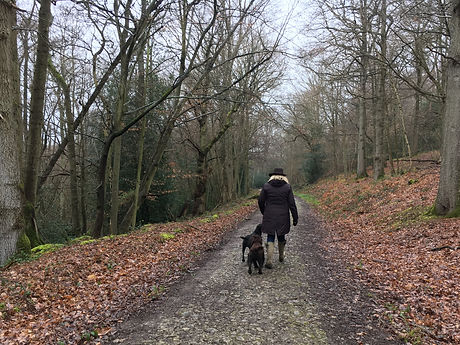 Happy Hounds Matfield Brenchley Wood Walk