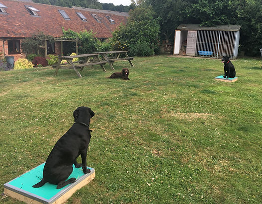 Place Board Training @ Happy Hounds Matfield