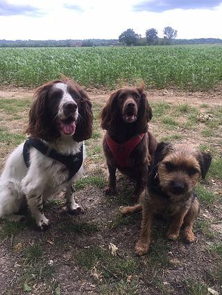 Happy Hounds Matfield Dog Walk