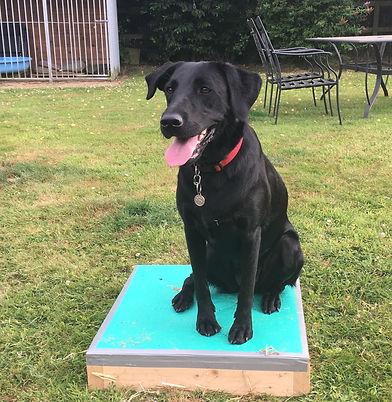 Happy Hounds Matfield Place Board Dog Training