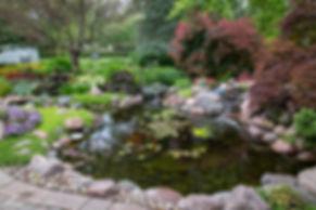 Ecosystem Pond_12.jpg