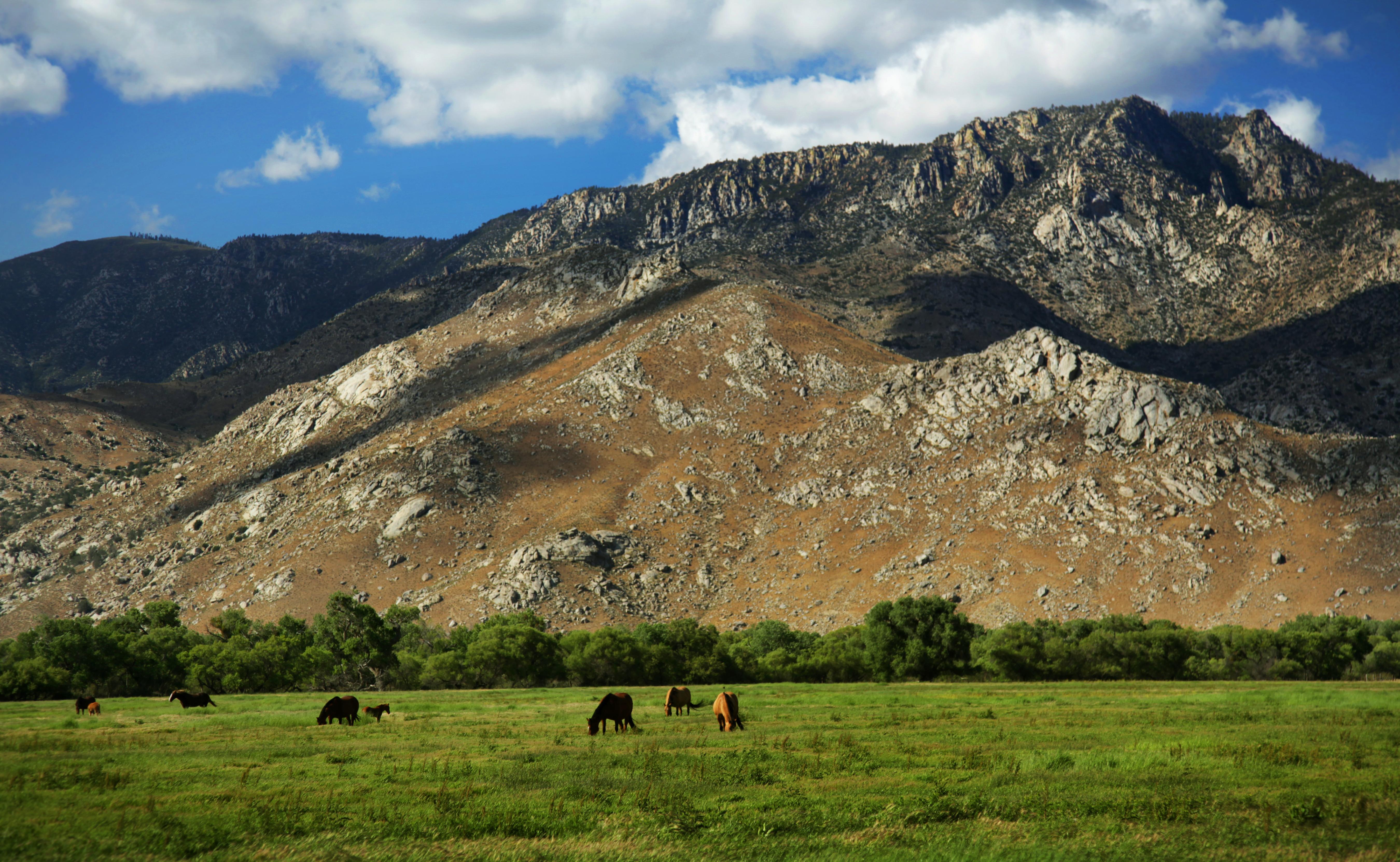 Pretty Horses pt2