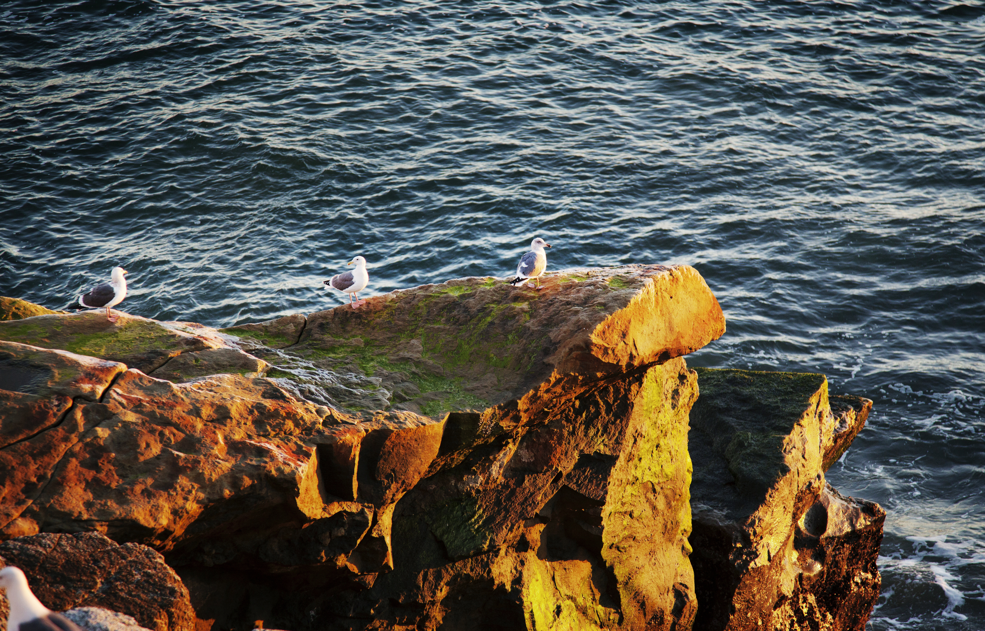 Seagulls on Rock Web