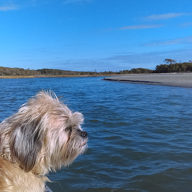 Lucy and the Salt Marsh