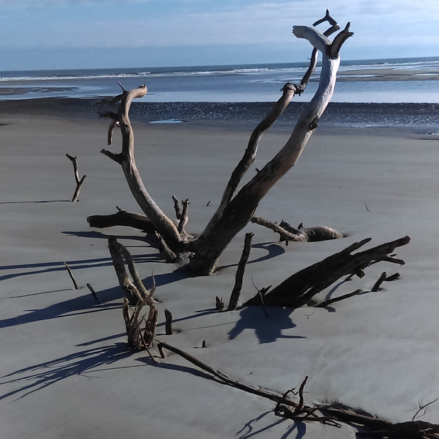 Driftwood on Waties Island