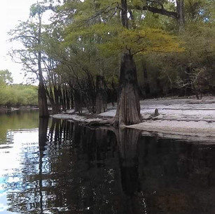 Cypress Trees on the river tour