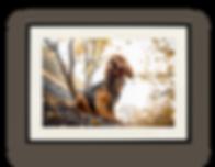 framedprint.png
