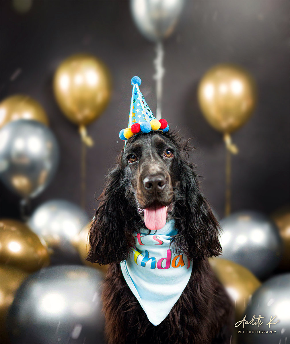 Picture Pawfect (Special Occasions)