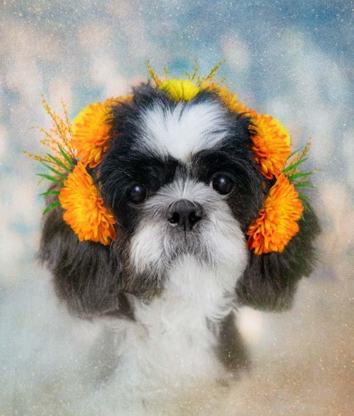 Collector's Edition 🌼 Dog Flowers!
