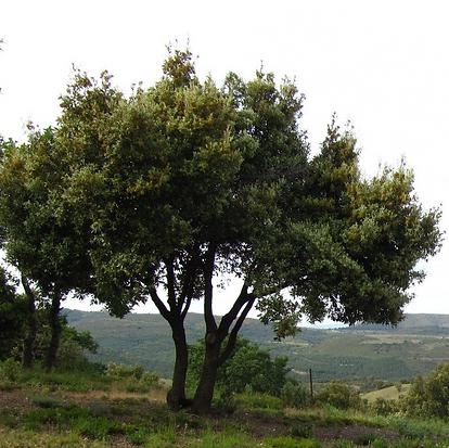 arbre original.png