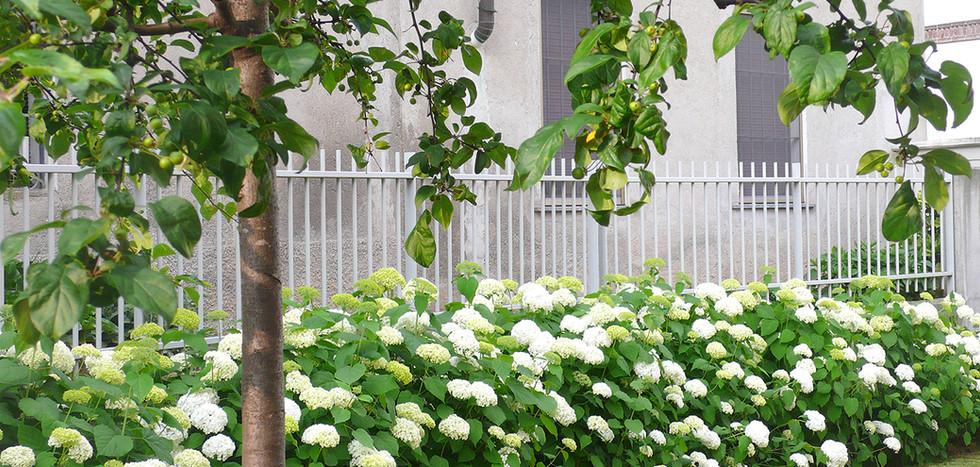 bordura ortensie giardino privato