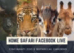 Safari Live.png
