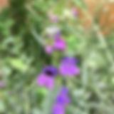 thumb_IMG_8394_1024.jpg