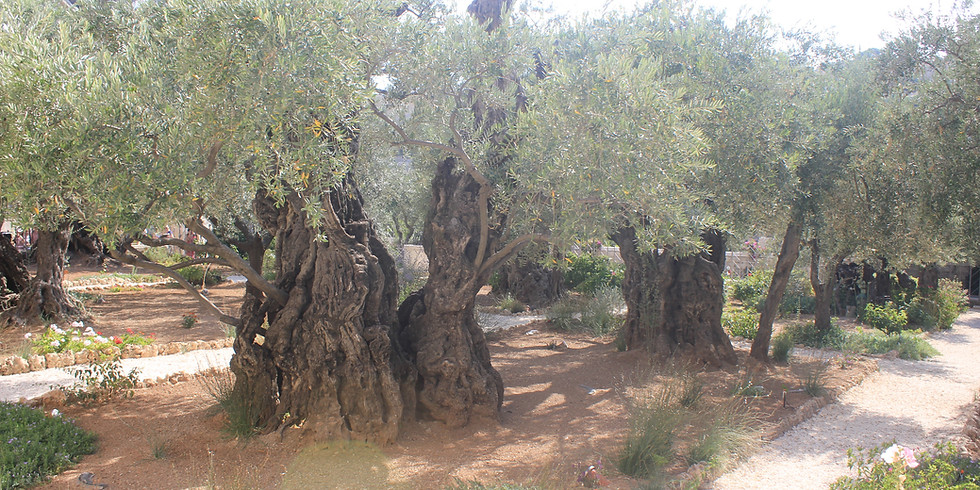 The Rock of Agony: Garden of Gethsemane