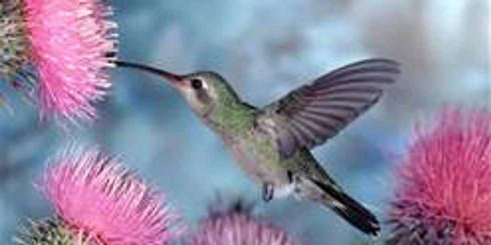Flight of the HUMMINGBIRD Meditation with Debbie On Site & On Zoom