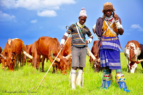 Sukuma tribe herds men.
