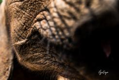 Baby Elephant mouth.jpg