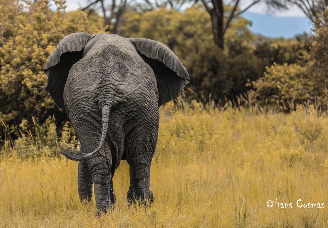 Elephant Back.jpg