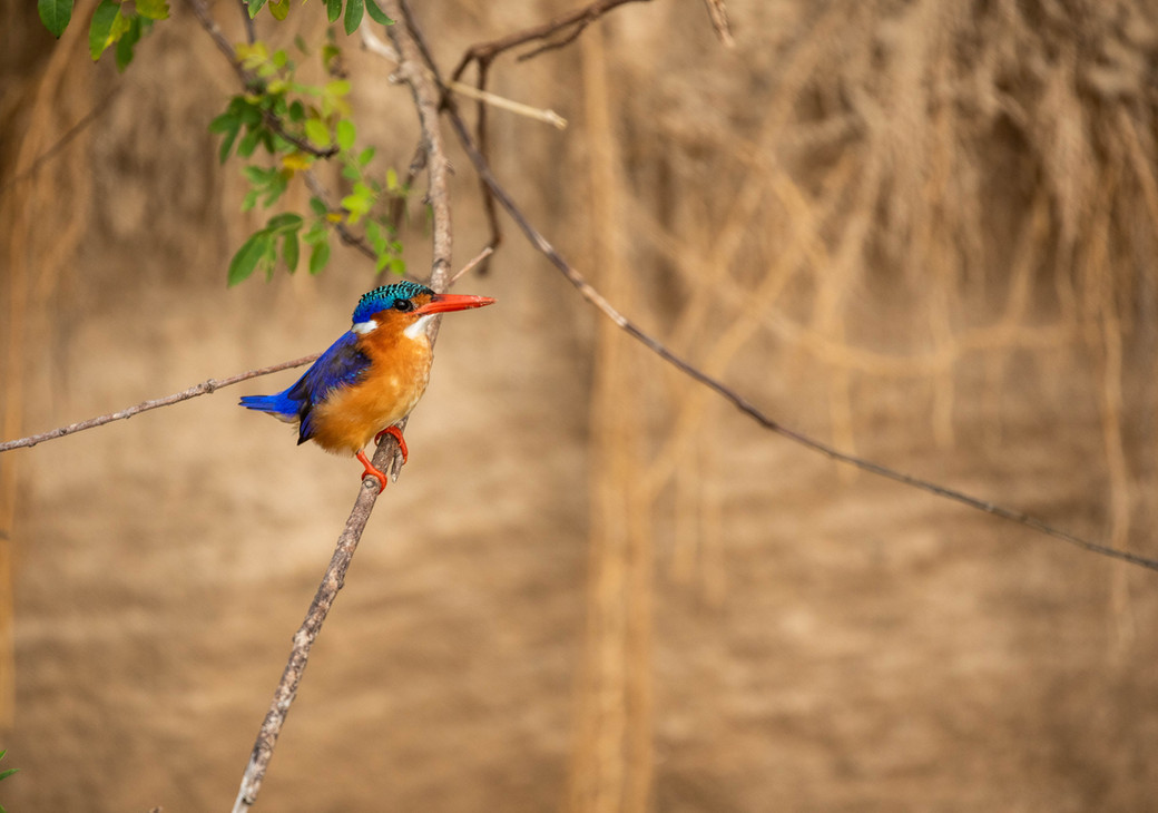 Kingfisher-2.jpg