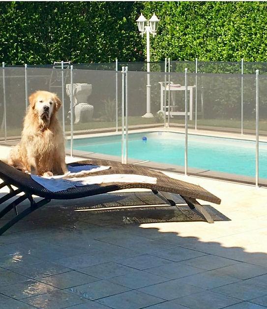 Revendendor de cercas para piscinas.jpeg