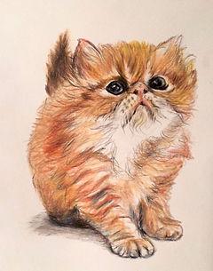 kitten%20web.jpg