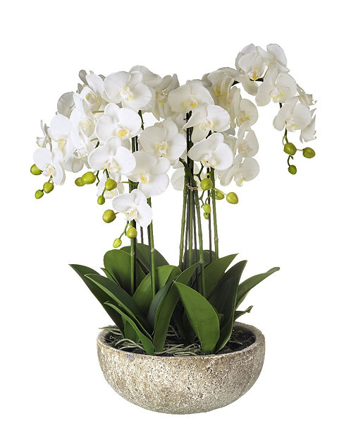 Orchid Spray in Ceramic Pot