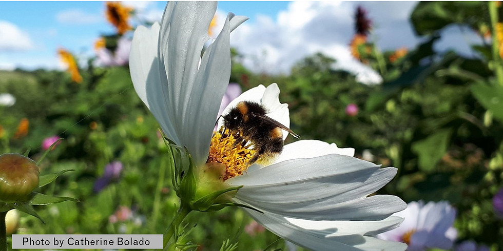 CANCELLED - Bees and Wildlife Gardening