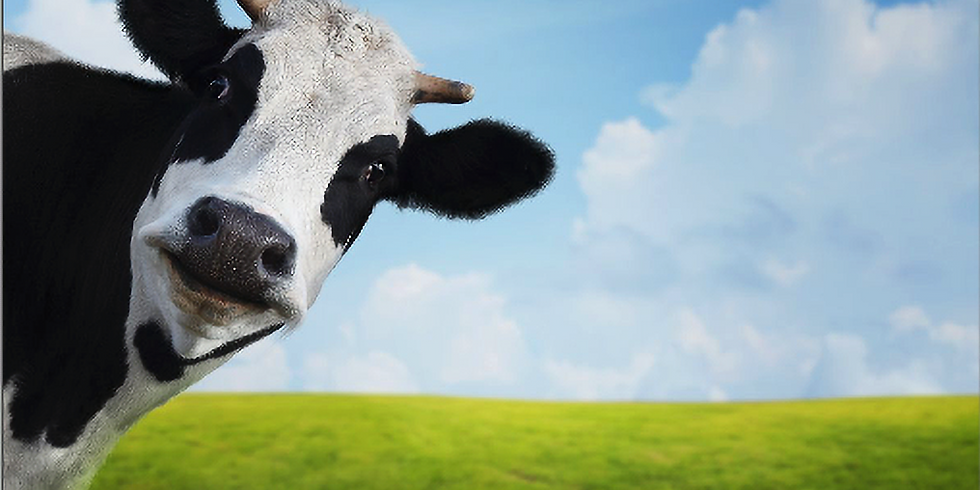 Cow burps & climate change