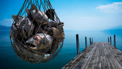 Catching Metals - Comp Art - Work: Photo compositing, environment painting, silhouetting, 3D modeling/texturing, fishes and net, lighting, rendering (Maya, Illustrator and VRay), color correction, color grading and conversions.