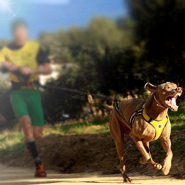 deporte con perros - pienso perros