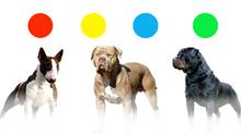 Sistema de identificación de agresividad en perros.