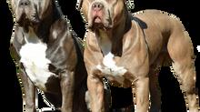 Guía de nutrición para perros. part 1