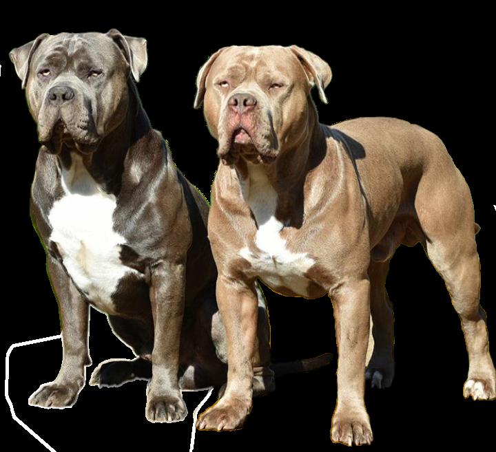 Nutrición para perros