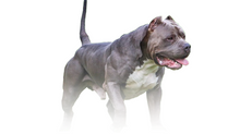 Guía de nutrición para perros. Part2