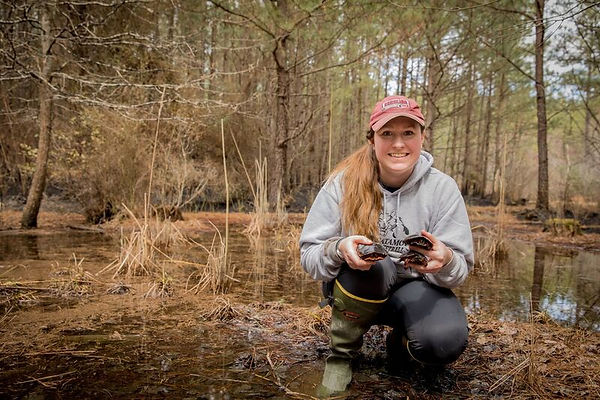 Graduate student Lauren Jurczak holding 3 spoted turtles at her field site.