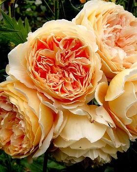 roza-kroun-princessa-margaret-rose-crown