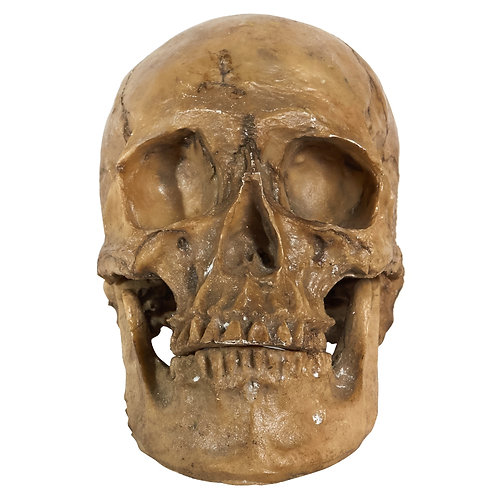 Cráneo resina G