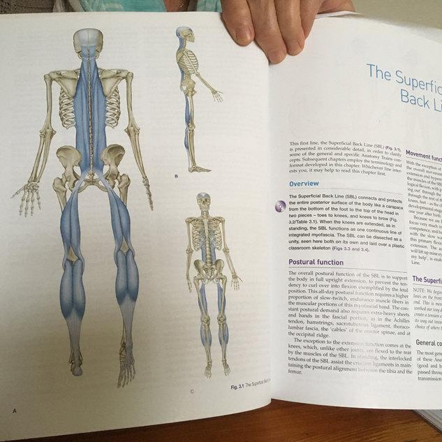 Anatomie en fysiologie vormen een gezond fundament voor ons inzicht in de innerlijke adembeweging.