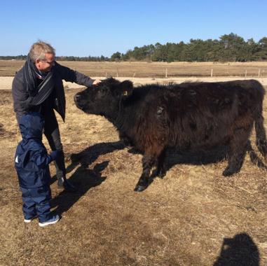 Morfar og Victor hilser på en ko - marts