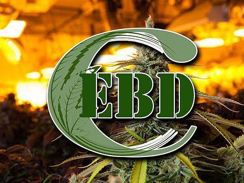 EBDC ERC20 Token