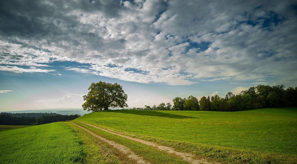 landscape-3688043.jpg