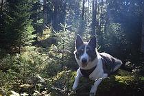 Hundehort Welschhaus