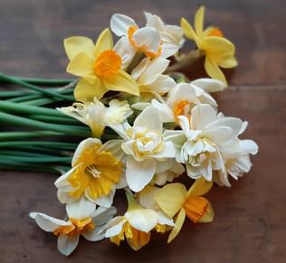Daffodill Harvest