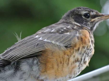 The Bewildered Birdie