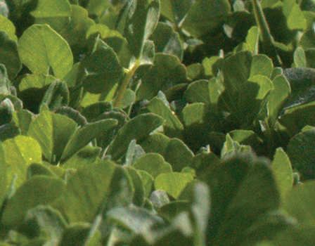 cover-crops-banner.png